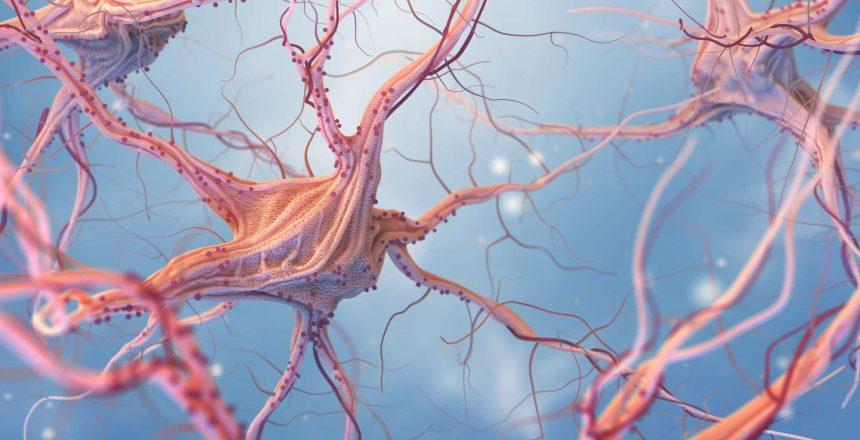 Neuropathic nerves